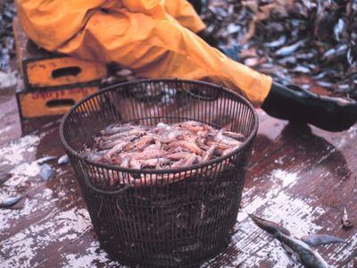 Basket of Gulf Shrimp