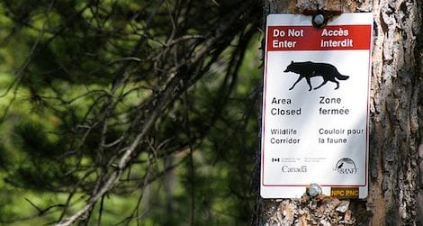 Wildlife corridors allow animals to safely cross urban areas.