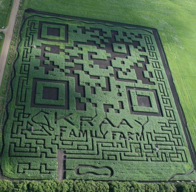 This Alberta corn field was shaped into a massive QR code.