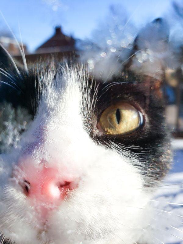Cat through frosty window thumbnail