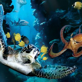 p-film-deepsea.jpg