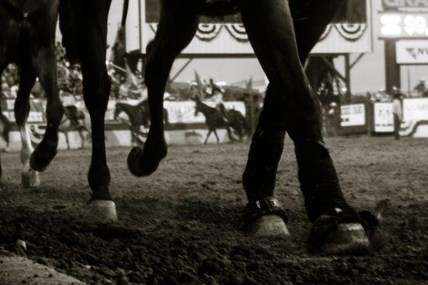 Horse hooves  thumbnail