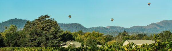 Vineyard Hot Air Balloon Panorama thumbnail