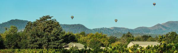 Vineyard Hot Air Balloon Panorama thumbnail