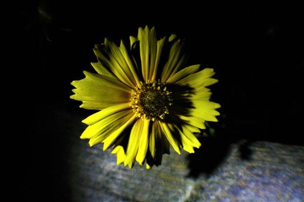 Night Bloom thumbnail