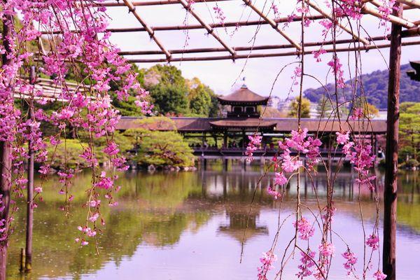 Spring in Kyoto thumbnail