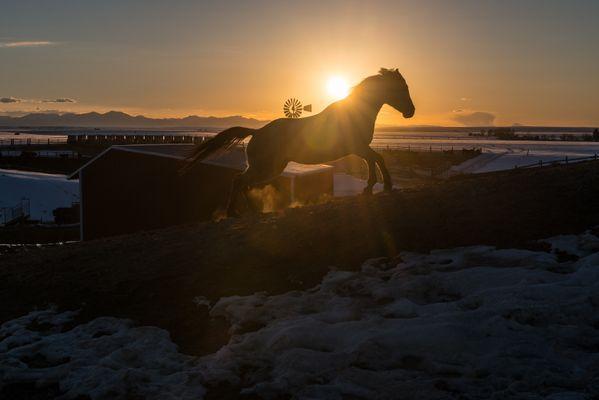 Dark Horse thumbnail