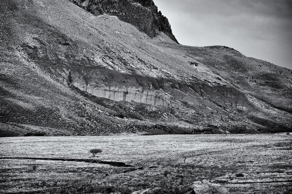 On the road to Aluminé village, a little tree in a small wintry valley. thumbnail