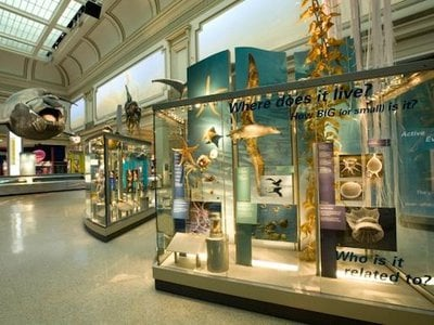 The Sant Ocean Hall at the Natural History Museum is just one of the many attractions to be enjoyed this holiday weekend.