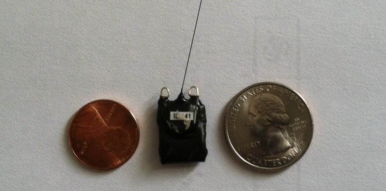 The Hottest New Accessory for Songbirds: Tiny GPS-Enabled Backpacks