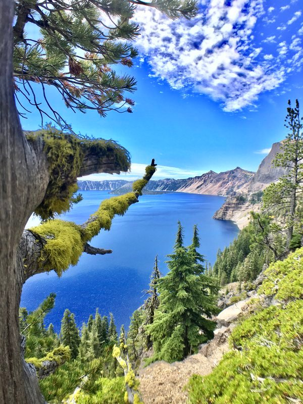 moss-covered evergreens of crater lake thumbnail