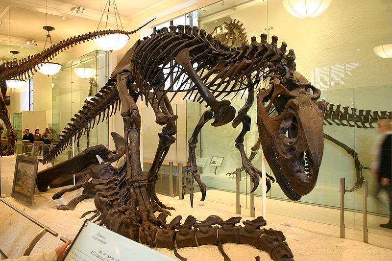 20110520083312Allosaurus-AMNH-skeleton.jpg