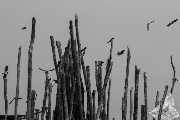 Birds at the floating village thumbnail