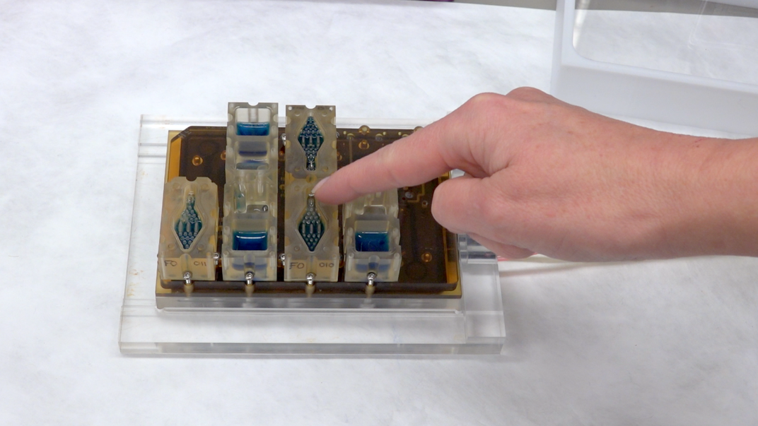 Your Monthly Menstrual Cycle, Reenacted on a Microchip