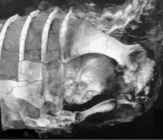 20110520083303willo-dinosaur-heart.jpg