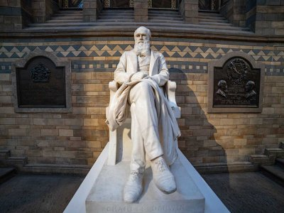 A statue of Charles Darwin sits in the Natural History Museum in London. The scientist's book 'Descent of Man' was published in 1871.