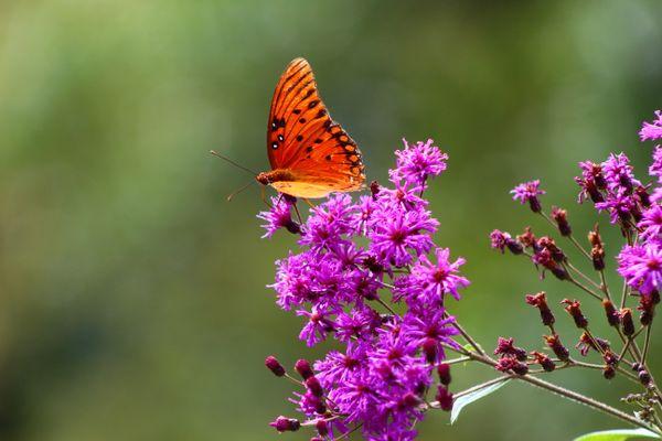 Butterfly Beauty thumbnail
