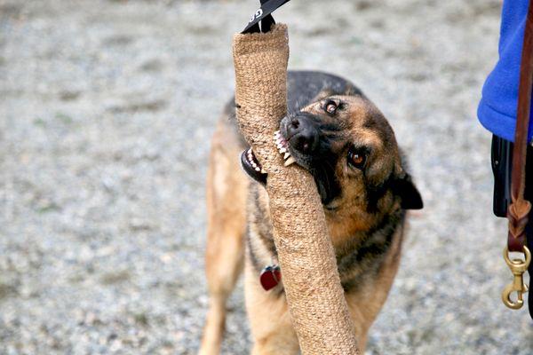 "Search Dog ""Xena"" Gets Her Reward thumbnail"