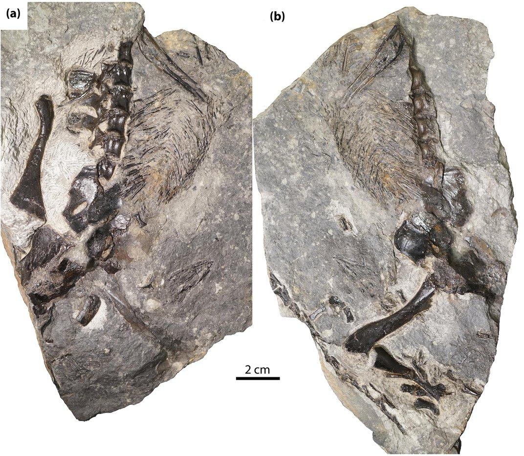 Lizard-Like Fossil May Represent 306-Million-Year-Old Evidence of Animal Parenting