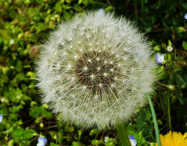 Bloom Full O' Wishes thumbnail