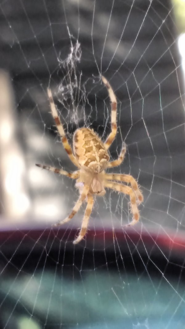 Spider and its dwelling. thumbnail
