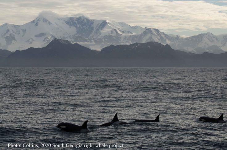 Delaware-Sized Iceberg Could Decimate Wildlife on South Atlantic Island