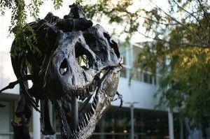 20110520083143google-campus-tyrannosaurus-300x199.jpg