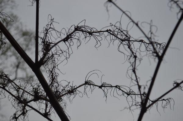 Spider Legs thumbnail