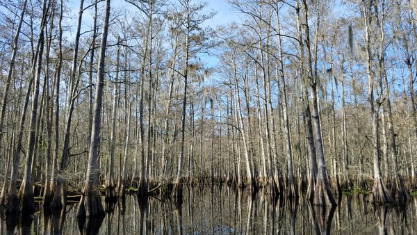 Central Florida Everglades Beauty thumbnail