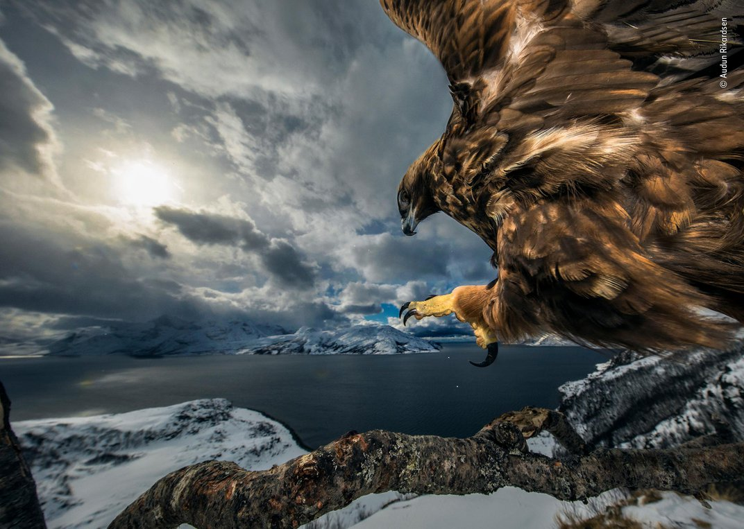 See a Fox Spook a Marmot and More Award-Winning Wildlife Photographs