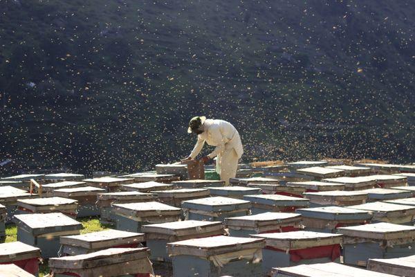 Bee Farm thumbnail