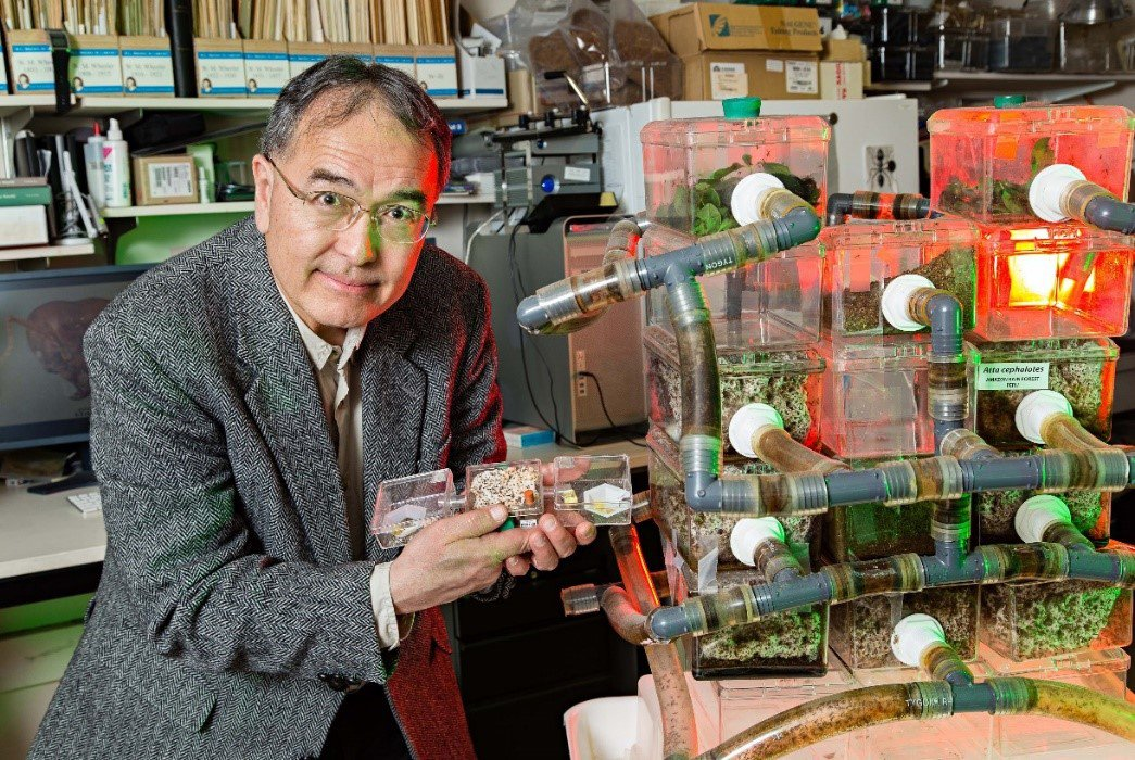 Person in a lab with an ant colony in plastic tubes