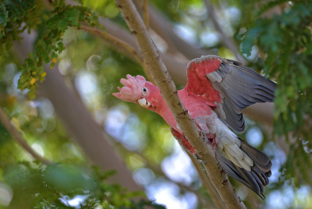 14 Fun Facts About Bright Pink Animals
