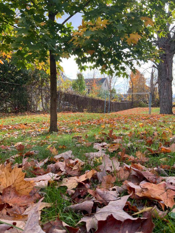 Autumn Breeze thumbnail