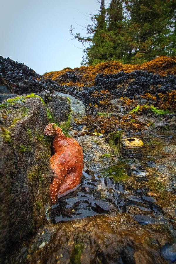 Life in the Great Bear Rainforest thumbnail
