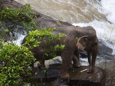 Two surviving elephants were trapped on a small cliff at the waterfall at Khao Yai National Park in central Thailand.