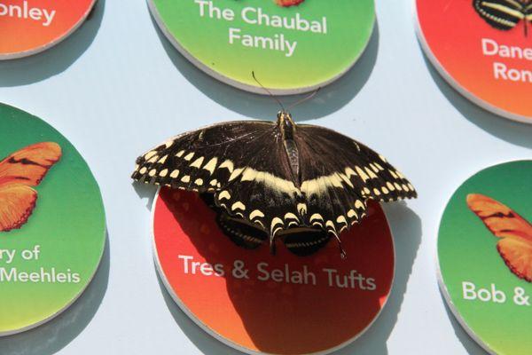 Smart Butterfly thumbnail