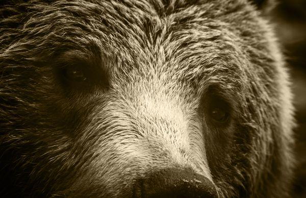 Grizzly's Soul thumbnail