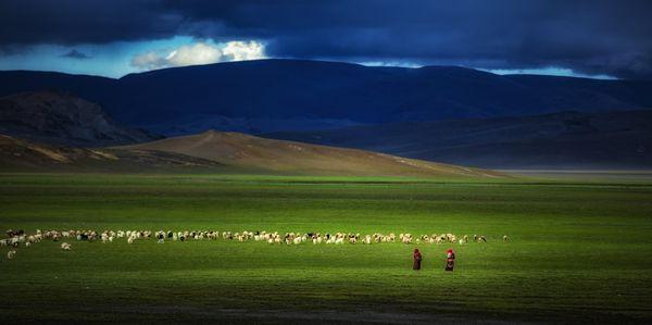 Harmonious pasture1 thumbnail