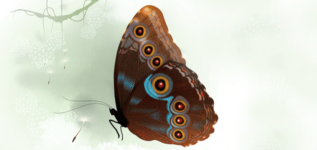Biomimicry-butterrfly-631.png