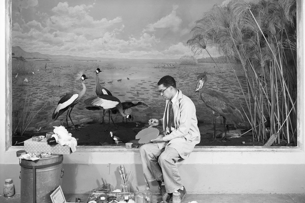 The Chicago Field Museum Celebrates the Work of African American Taxidermist Carl Cotton