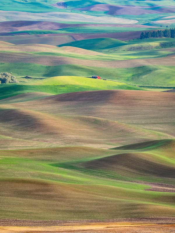 Red Barn in the Palouse thumbnail