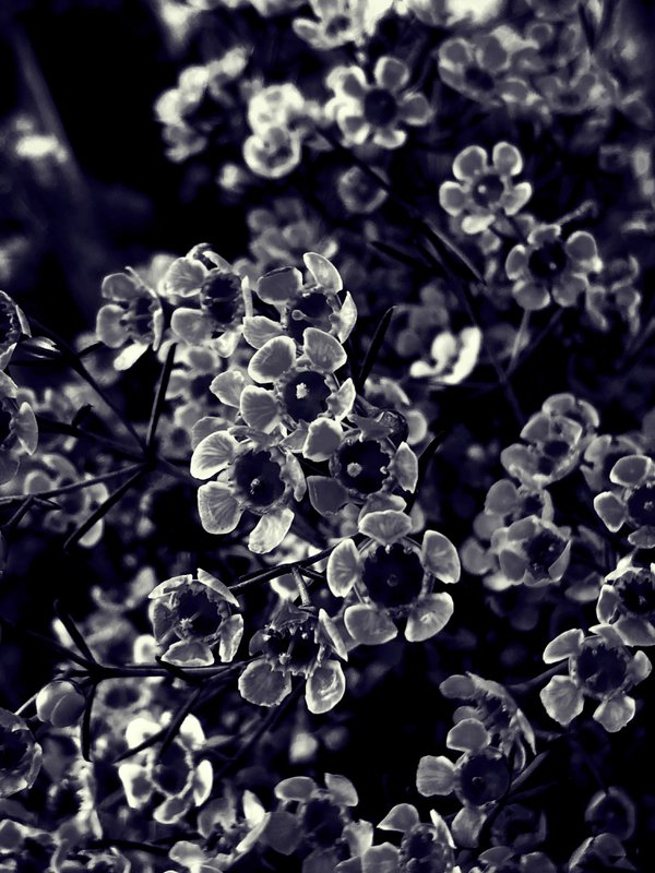 X-Ray Flowers thumbnail