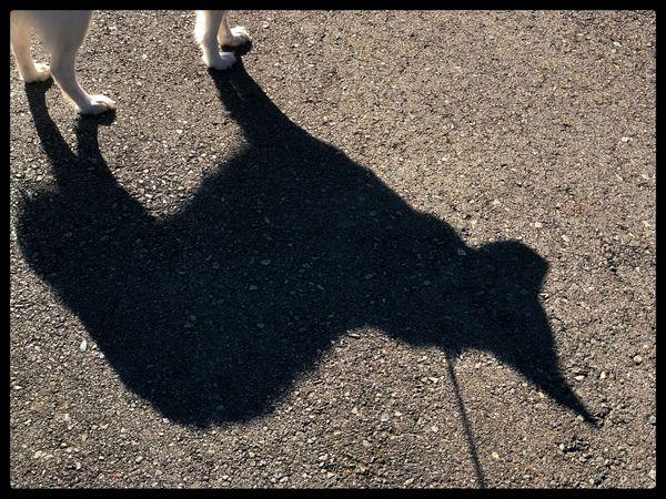 Toby's Shadow thumbnail