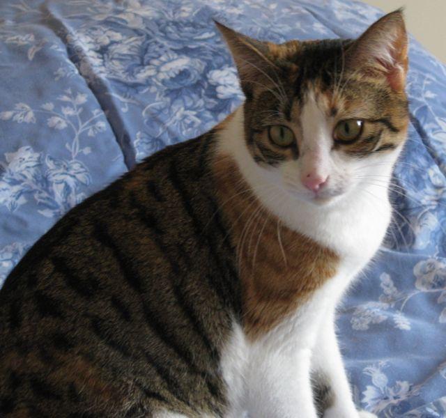 20110520104108cat.jpg