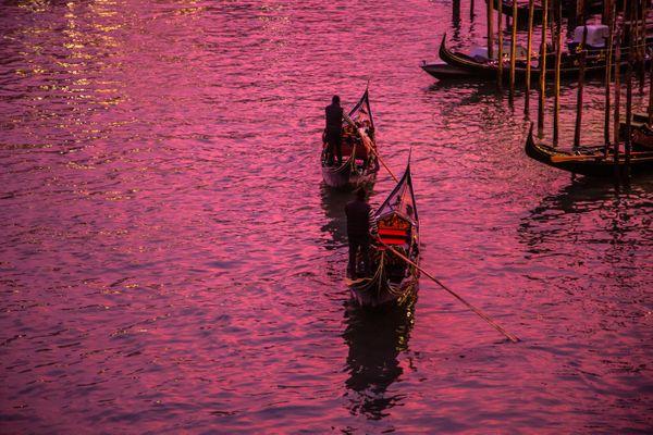 Venice Pinks thumbnail
