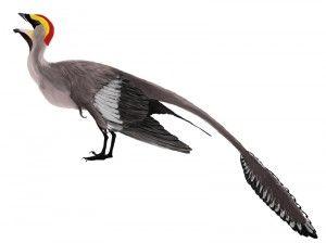 20110520083245Jeholornis_mmartyniuk_wiki-300x224.jpg
