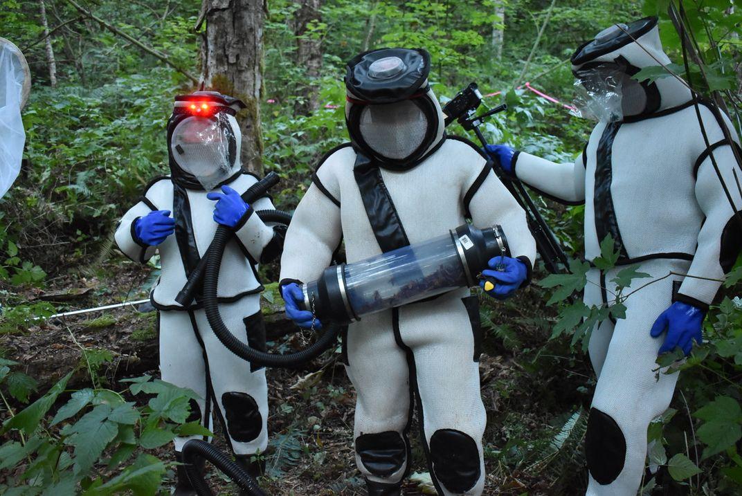 Entomologists Eradicated the First Asian Giant 'Murder' Hornet Nest of 2021