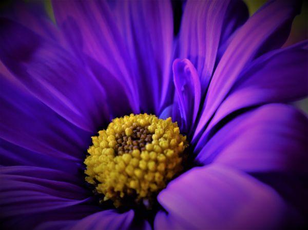 Purple flower blooming thumbnail
