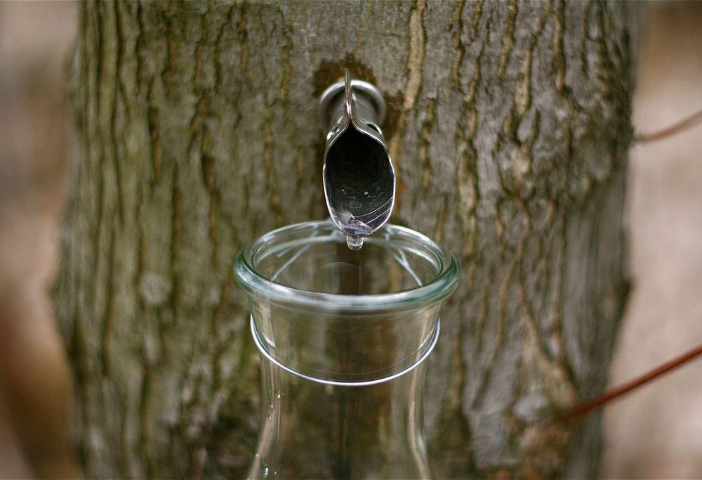 Maple sap tap